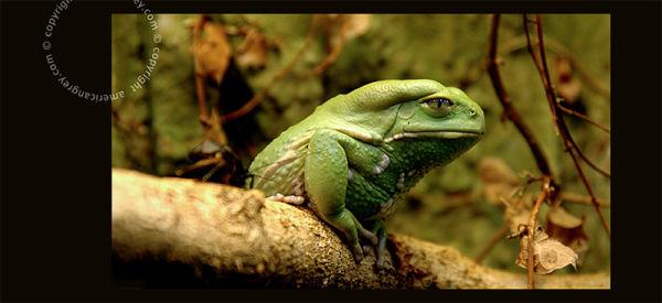 Lookin' Good in Green