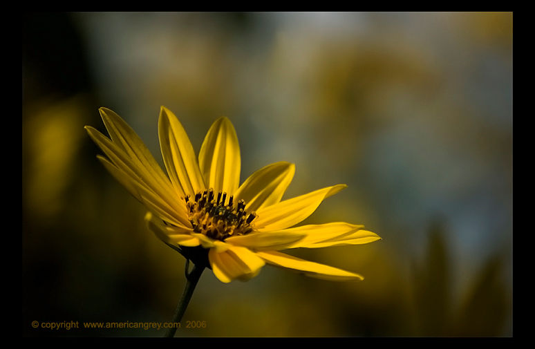 Sunflower Reaches Fall