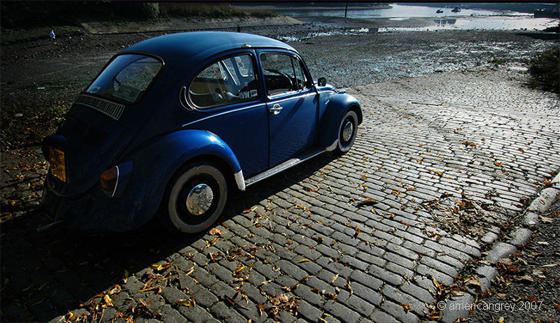 Beetle on the Shore