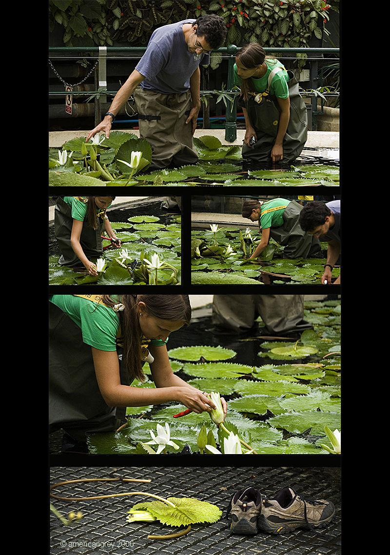 Maintaining the Waterlilies
