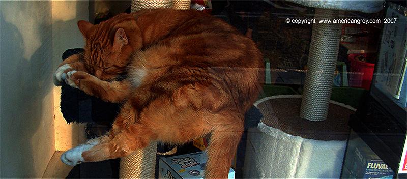 Live Demo - Cat Tree