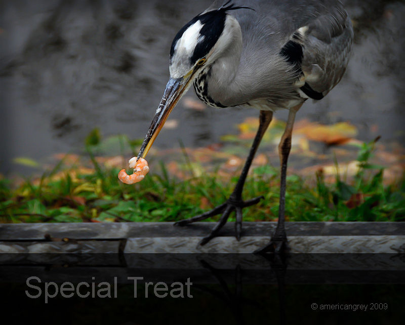 Special Treat