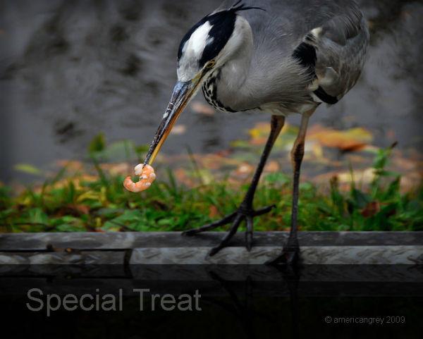 Special Treat