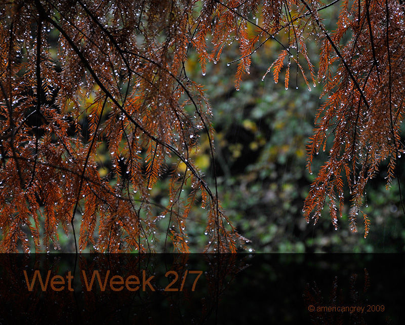 Wet Week 2/7