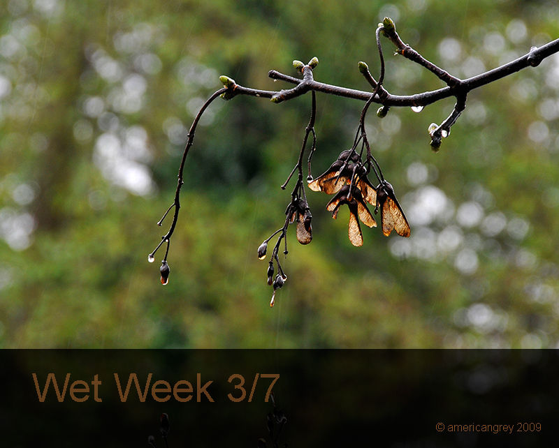 Wet Week 3/7