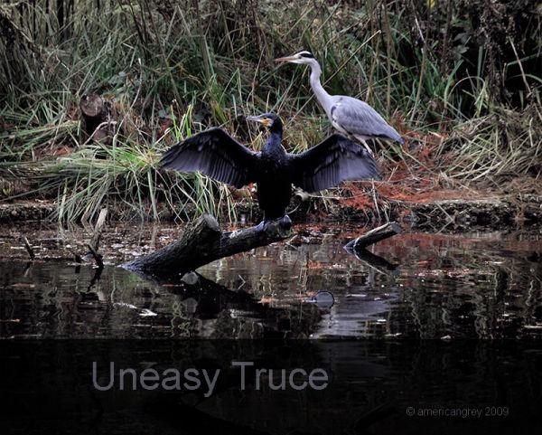 Uneasy Truce