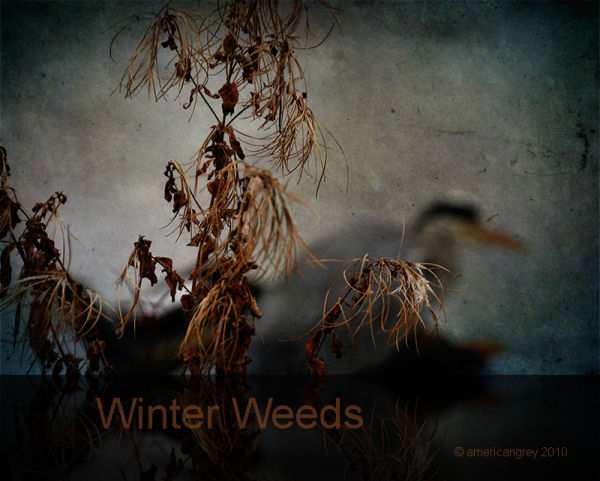 Winter Weeds Preview