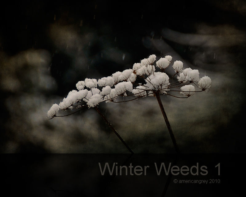 Winter Weeds 1/6