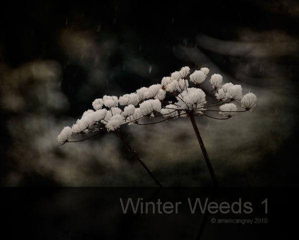 Winter Weeds 1/6
