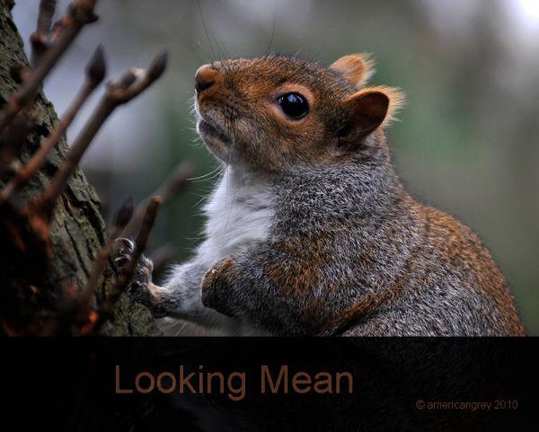 Looking Mean