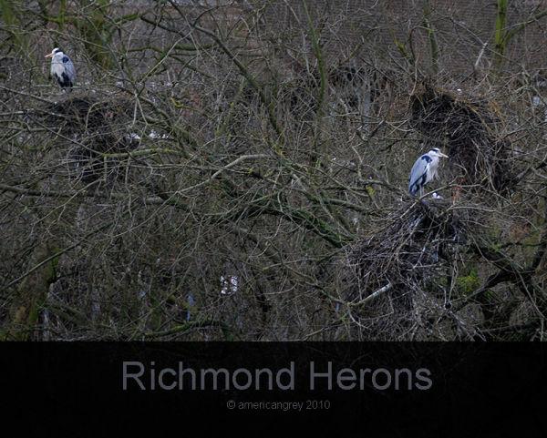 Heronry