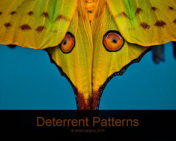Deterrent Patterns