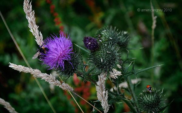 Summer Weeds 5/7