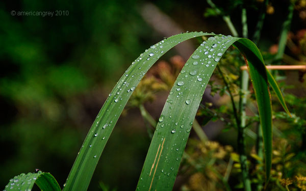 Summer Weeds 6/7