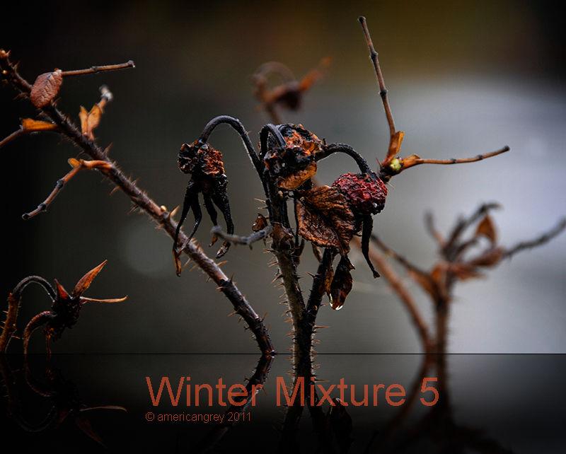 Winter Mixture 5