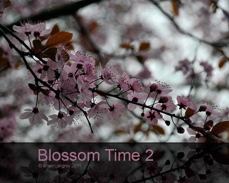 Blossom Time 2