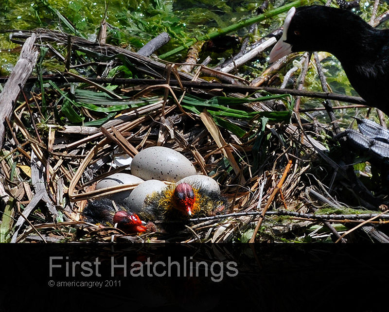Hatched !
