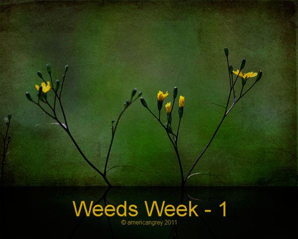 Weeds Week 1/7
