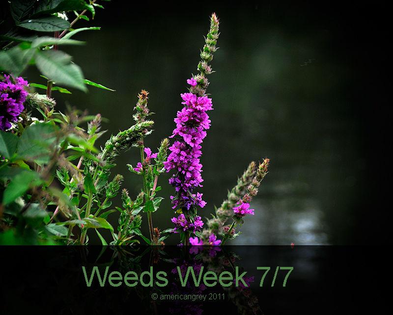Weeds Week 7/7