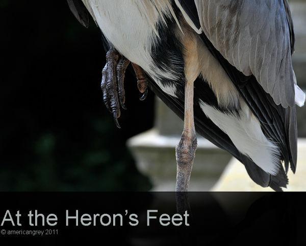 at the Heron's Feet