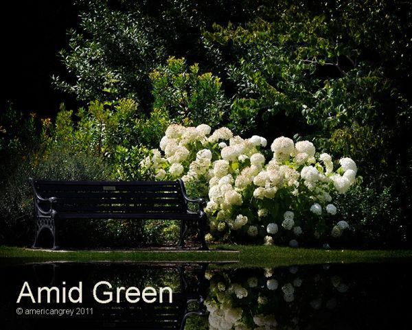 Amid Green