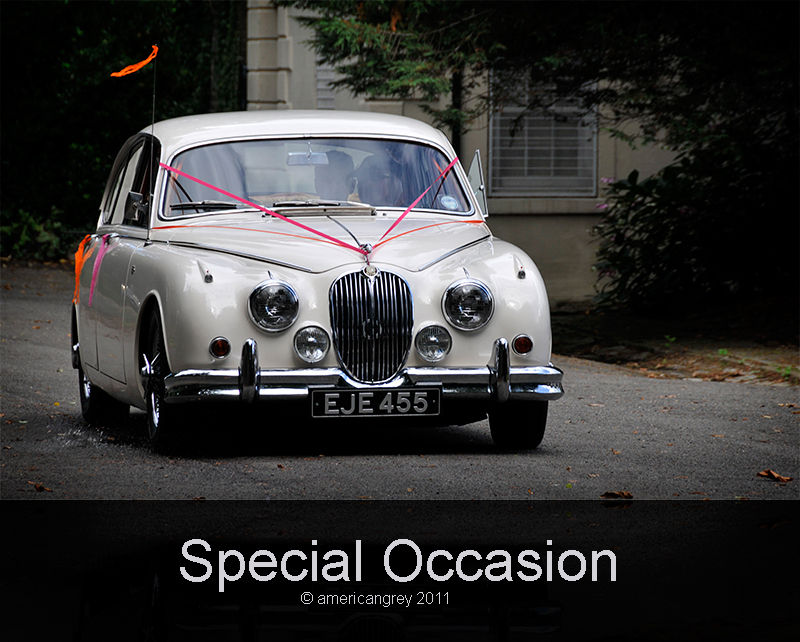 Special Occasion