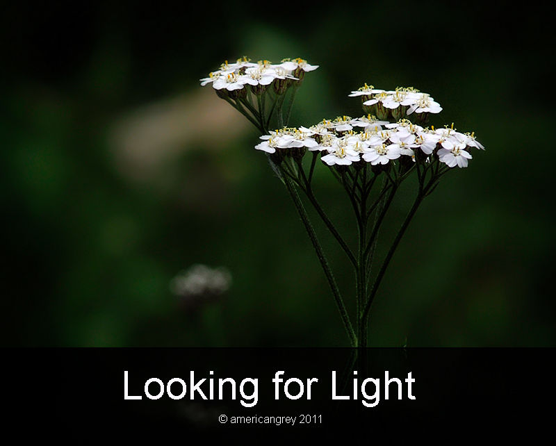 Looking for Light