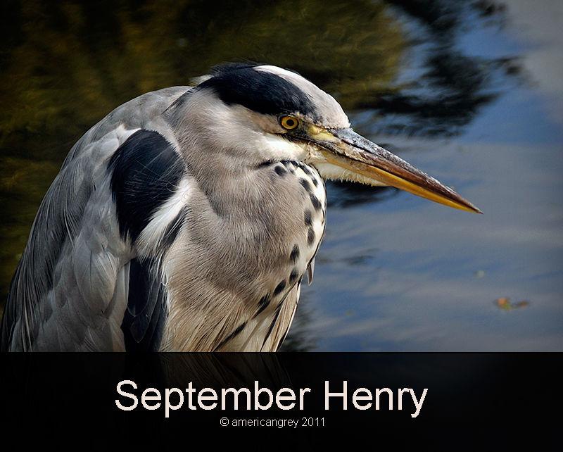 September Henry