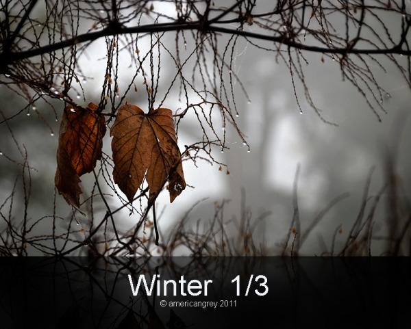 Winter  1/3