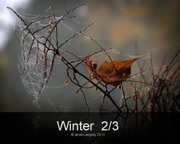 Winter  2/3