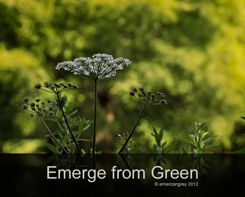 Emerge from Green