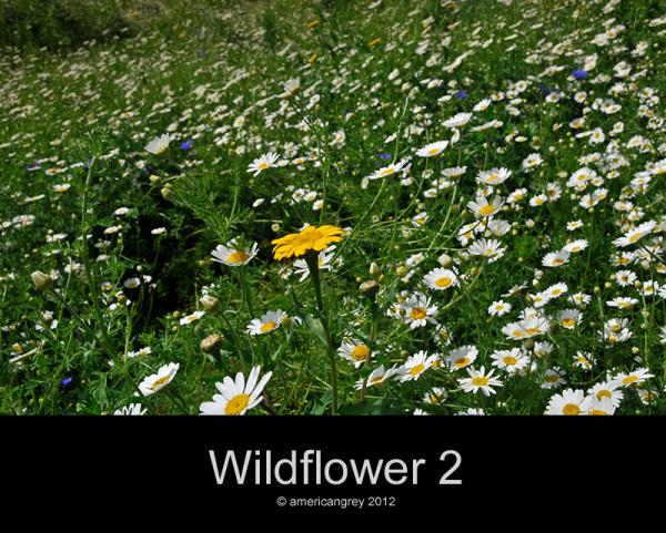 More Wildflower (2/3)
