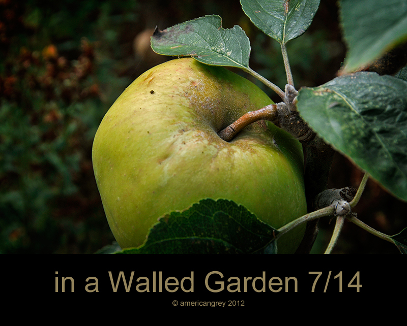 Walled Garden 7/14