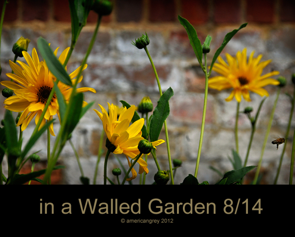Walled Garden 8/14
