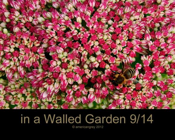 Walled Garden 9/14