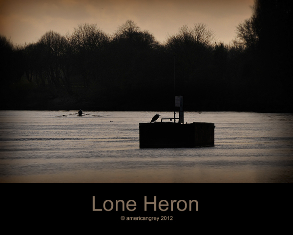 Lone Heron