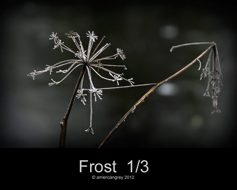 Frost  1/3