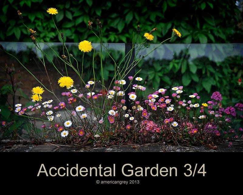 Accidental Garden 3/4