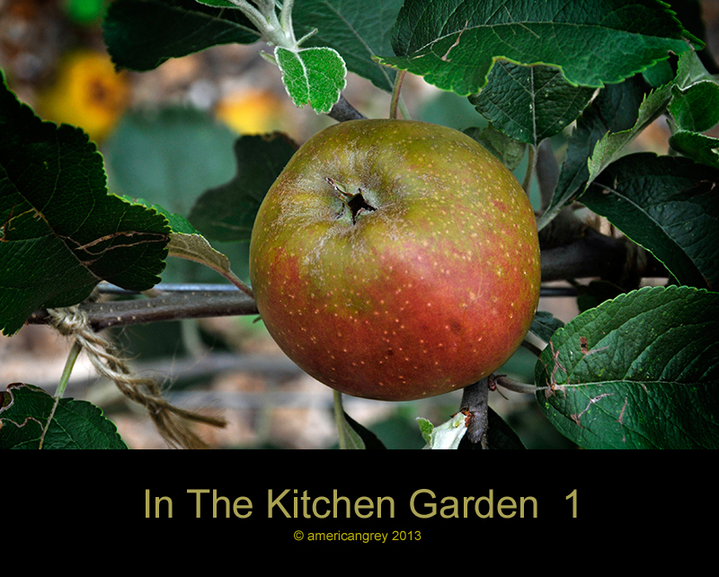 In The Kitchen Garden  1