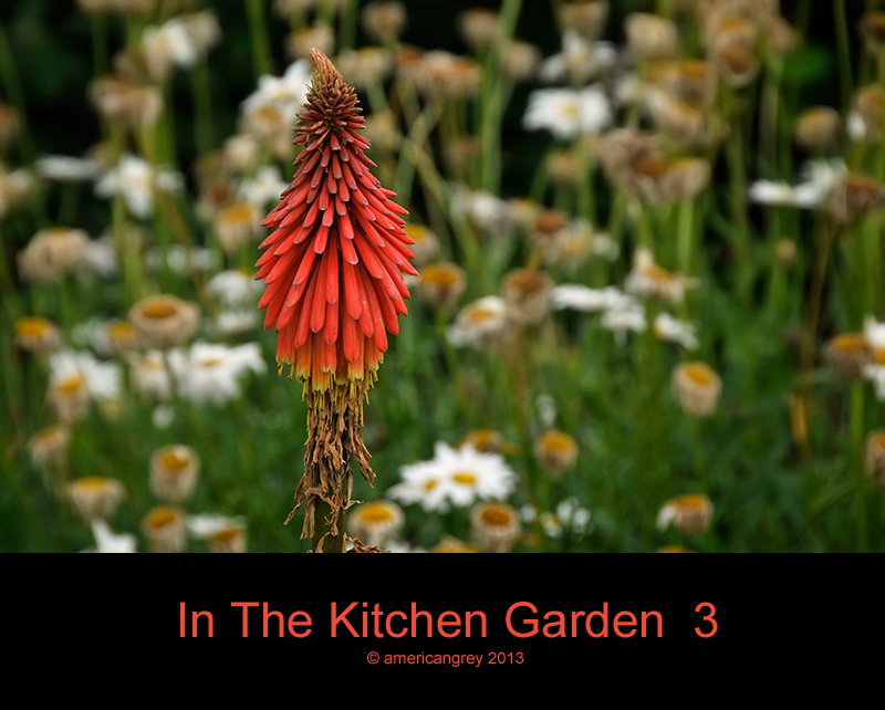 In The Kitchen Garden  3