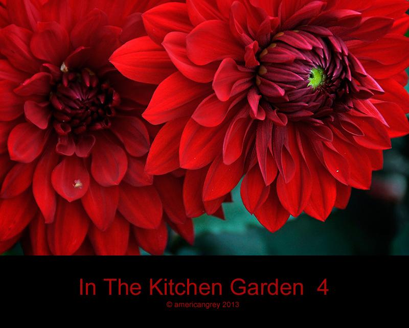 In The Kitchen Garden  4