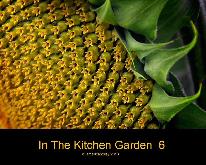 In The Kitchen Garden  6