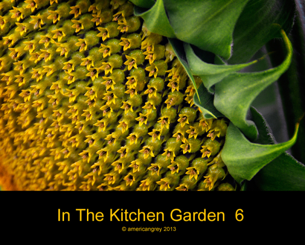 In The Kitchen Garden  6