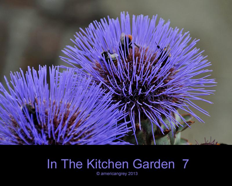 In The Kitchen Garden  7