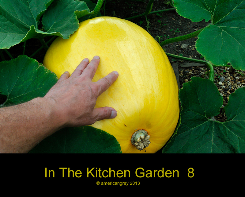 In The Kitchen Garden  8
