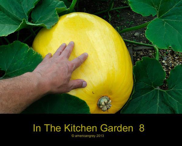 In The Kitchen Garden  8