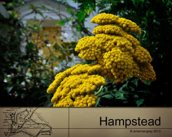 Hampstead 10