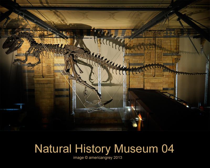 Natural History Museum 04