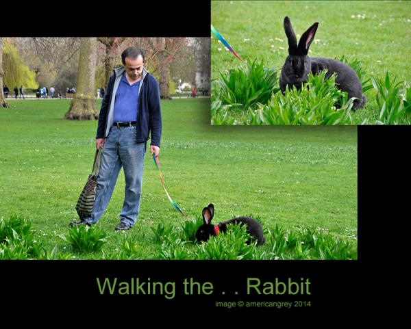 Walking the . . Rabbit