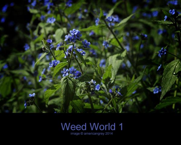 Weed World 1